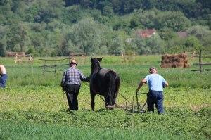 Agriculture in Maramureș