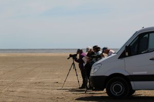 Scoping the shorebirds at Punta Rasa